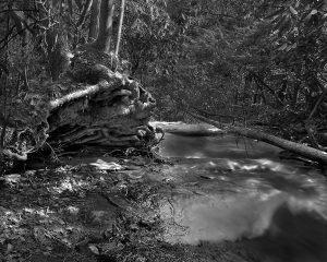 Falls Branch Falls, Tree Roots #2