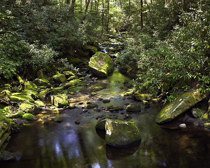 Joyce Kilmer Memorial Forest Creek