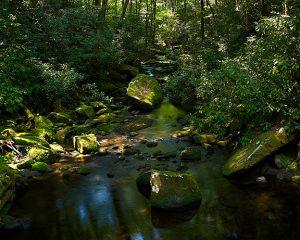 Joyce Kilmer Memorial Forest 1