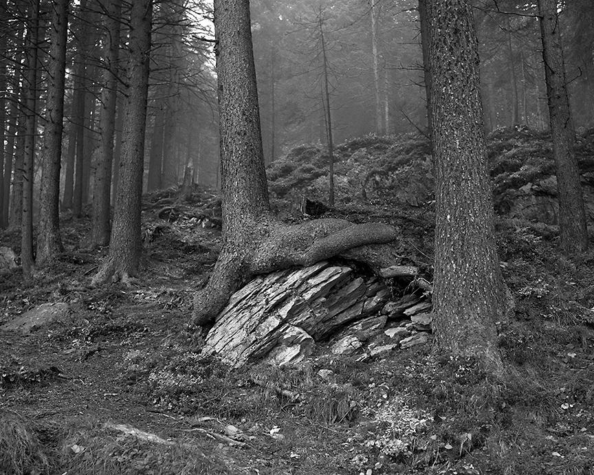 Tree Captures Rock